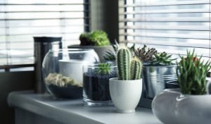 צמחים ירוקים בסלון
